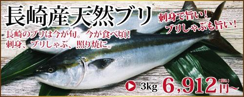 長崎産天然ブリ