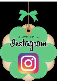 Instagramよしかわファーム