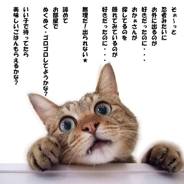 猫脱走防止パーテーション【キャキャCatCatch】つっぱりタイプだから床・壁を傷つけず設置カンタン