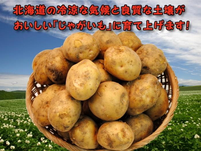 北海道の冷涼な気候と良質な土壌がおいしい「じゃがいも」に育て上げます!