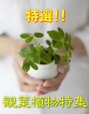 特選観葉植物