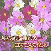 秋の風に揺れるコスモスの花束