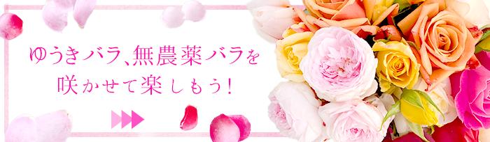 ゆうきバラを咲かせて楽しもう!