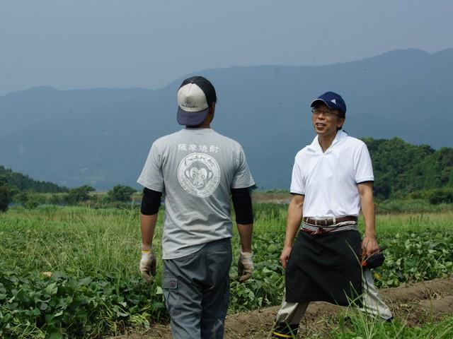 八千代伝酒造 上野台地芋畑