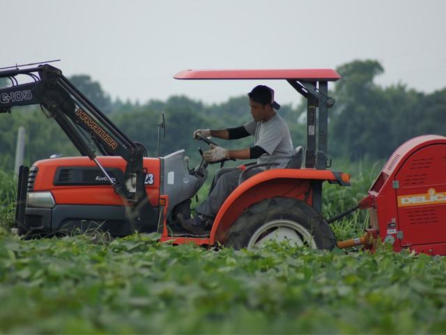 八千代伝酒造 垂水市上野台地芋畑