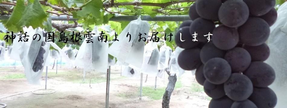 池田ぶどう農園Yahoo!店